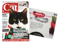 Your Cat Buyer Guide – Feb 2013